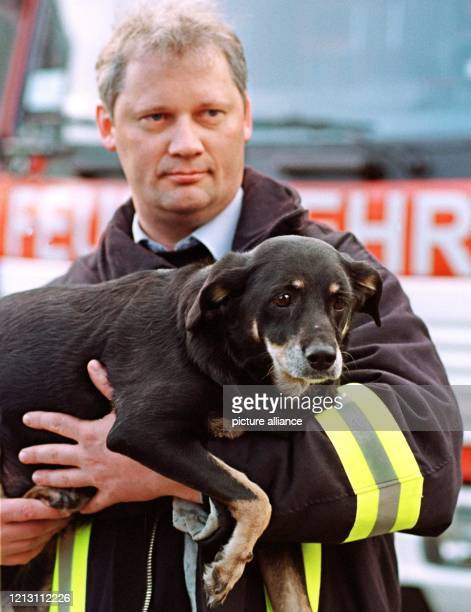 Ein Feuerwehrmann trägt am Morgen des den Hund, der zwei Tage nach der gewaltigen Gasexplosion in einem Senioren-Wohnhaus der Heilsarmee in Bremen...