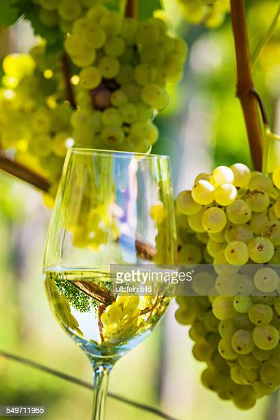 weinlese stock photos and pictures