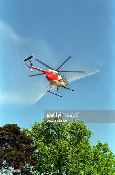 Ein Hubschrauber versprüht im Flug über den Frankfurter Stadtwald Schädlingsbekämpfungsmittel, um gegen die Überpopulation von Schwammspinnerraupen...