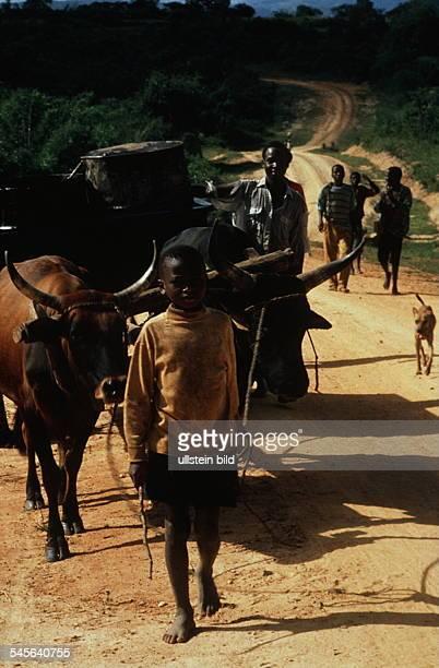 Ein Kind führt einen Ochsenkarren aufeiner Landstraße die mit GTZ Mittelnerrichtet wurde 00031995