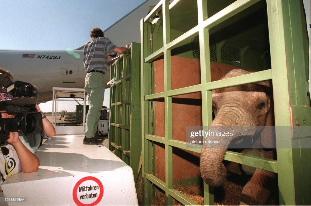 Elefanten-Transport : News Photo