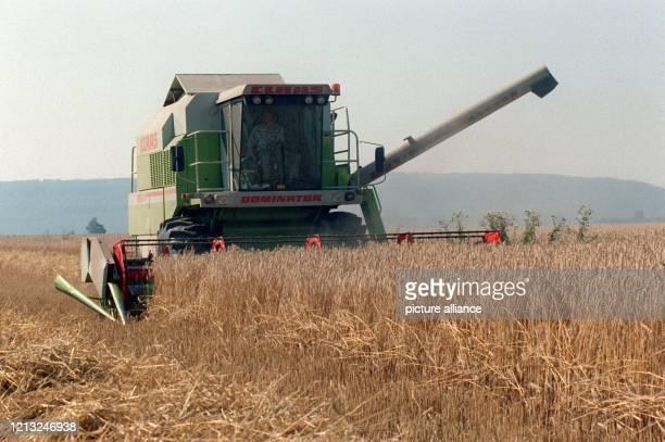 Ein Mähdrescher bei der Getreideernte am 881997 Hochbetrieb herrscht bei den Erntearbeiten der Bauern im Landkreis Jülich Während viele noch den...