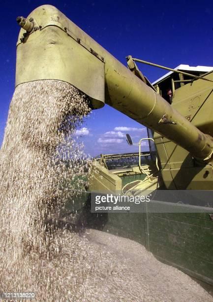 Ein Mähdrescher füllt in Pfaffenweiler Getreide in einen Anhänger um Der baden württembergische Landesbauernverband ist im Jahr 2000 mit der Qualität...