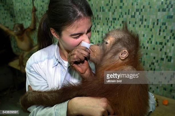 Ein OrangUtan auf dem Arm einer Frau im Affengehege eines Zoos