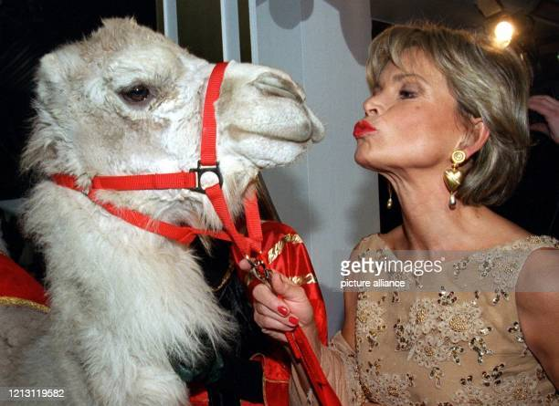 Ein Platz auch für Tiere: Mit einem Kuss begrüßt Serienstar Uschi Glas ein Dromedar beim Ball des Sports am 5.2.2000 in Wiesbaden. Die höchste...
