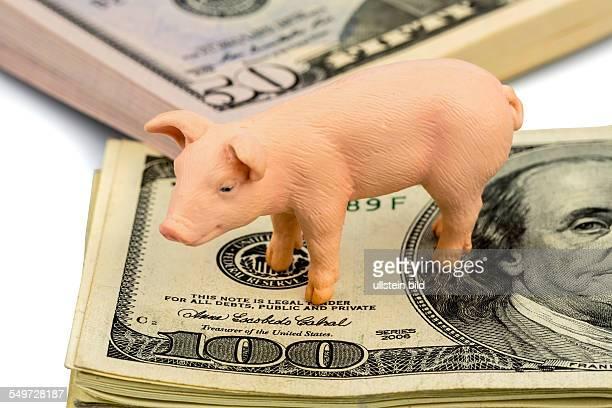 Ein Schwein steht auf Dollar Banknoten Steigende Kosten für Futtermittel in der Landwirtschaft Sinkende Erträge beim Schweinefleisch