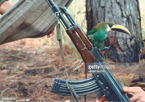 Ein Tukan hat sich auf der sovietischen Kalaschnikov AK47 niedergelassen Nicaragua