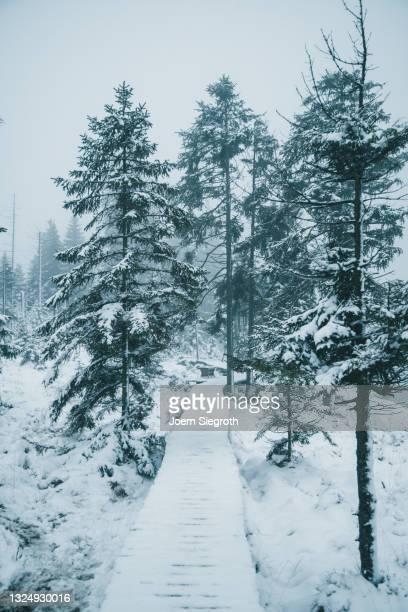ein weg führt durch den winterlichen wald - weg bildbanksfoton och bilder