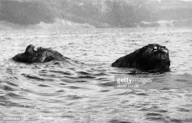 Eine Aufnahme des SeeUngeheuersvon Loch Ness Das 'Ungeheuer' war vermutlich einBaumstamm der von der Strömung bewegtwurde 1933