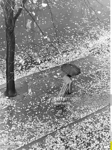 Eine Frau im Regenmantel mit Regenschirm läuft auf einem Gehweg mit Herbstlaub 1953