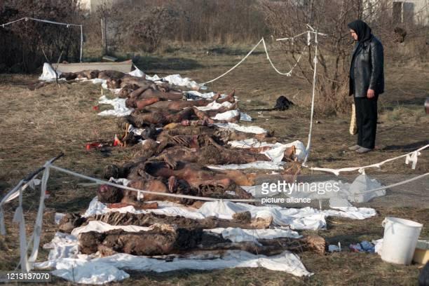 Eine Frau steht am in Temesvar vor einer Reihe von Leichnamen die aus einem Massengrab exhumiert wurden Bei den Leichen soll es sich um Mordopfer der...