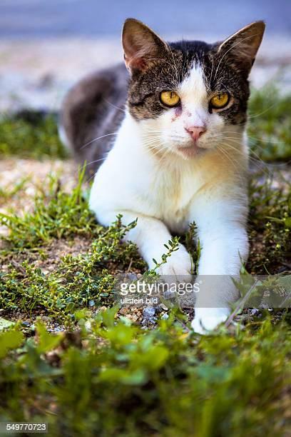 Eine gefleckte Hauskatze sitzt am Boden und wartet