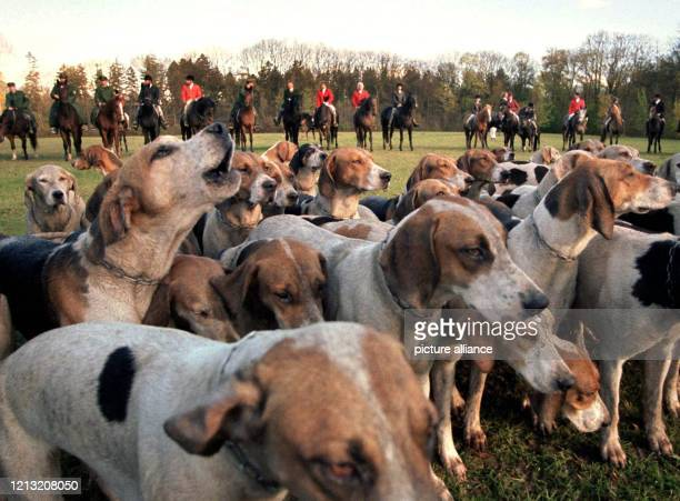 Eine Gruppe von etwa 50 Reitern mit ihren Jagdhunden versammelt sich am 25. Oktober 1998 im Englischen Garten in der Münchner Innenstadt. Bereits zum...