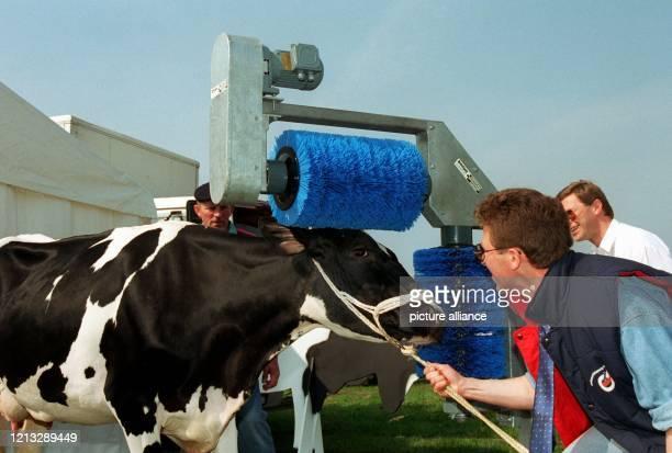 Eine vollautomatische Waschstraße für Kühe ist die kurioseste Erfindung die zur Zeit auf der Norddeutschen Landwirtschaftlichen Fachausstellung NORLA...