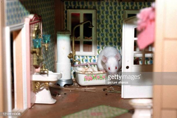 Eine weiße Maus klettert am 23 22000 im Hessischen Rundfunk in Frankfurt aus der Badewanne in einem Mäusehaus Eine tierische Alternative zur...