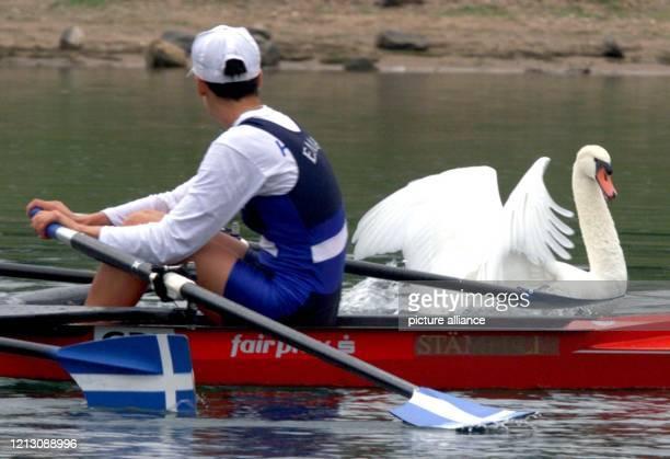 Einen Schwan scheucht ein griechischer Ruderer mit seinem Skull am ) bei der Ruder-Weltmeisterschaft auf dem Fühlinger See bei Köln auf. Bis zum 13....