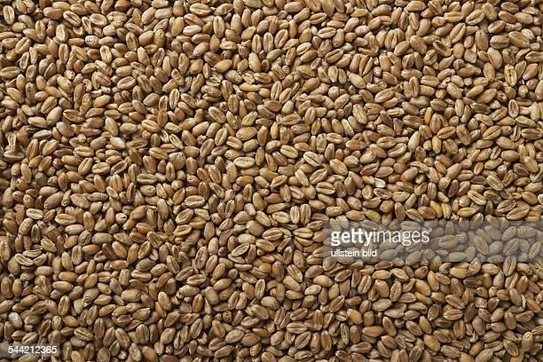 einzelne Weizenkoerner