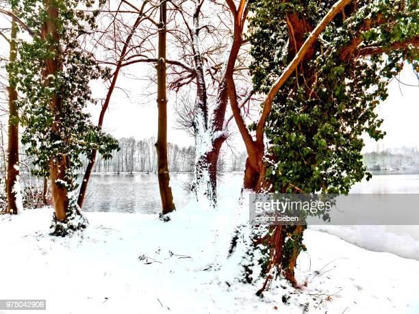 Eis und Schnee im Januar