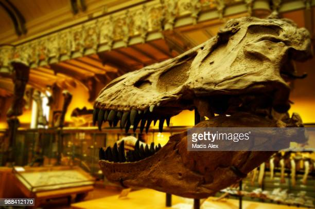 e.jpg - tyrannosaurus rex stock photos and pictures