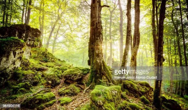 el bosque en alguna parte de izki - parte de stock pictures, royalty-free photos & images