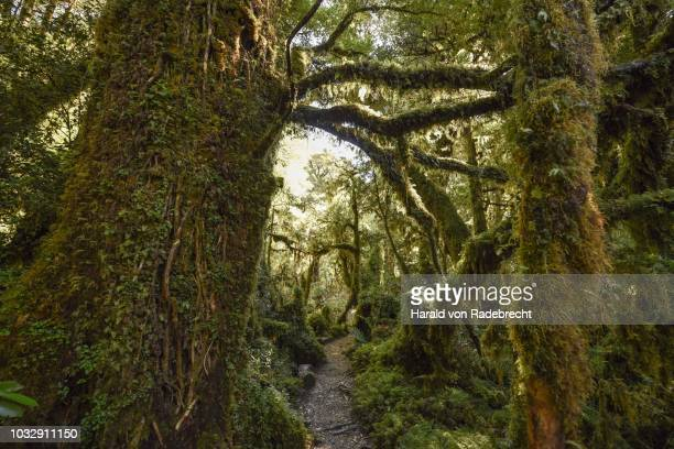 Bosque Encantado Photos And Premium High Res Pictures Getty Images