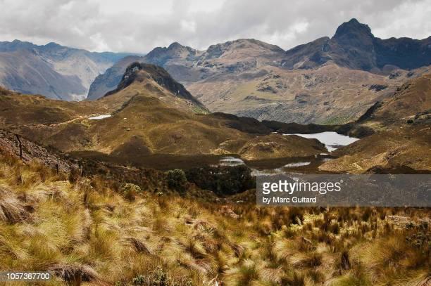 el cajas national park, ecuador - tundra stock-fotos und bilder
