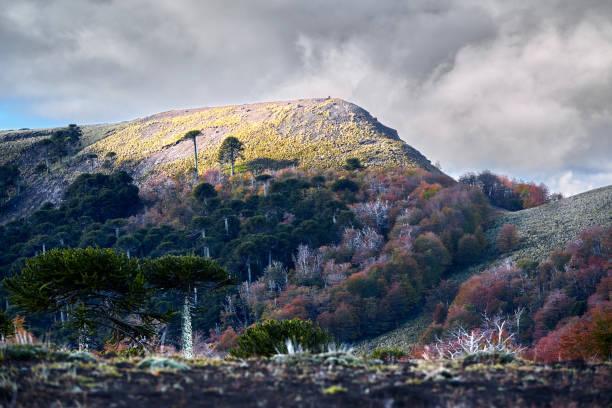 El camino en cuesta Las Raices asciende entre cumbres iluminadas  y bosques otoñales  - Parque Nacional Malalcahuello-Nalcas