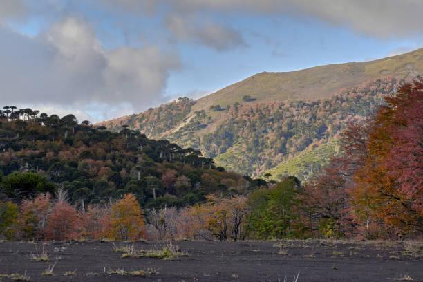 El camino en cuesta Las Raices asciende entre cumbres y bosques otoñales  - Parque Nacional Malalcahuello-Nalcas