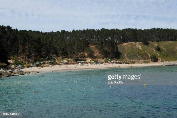 El Canelo beach Chile