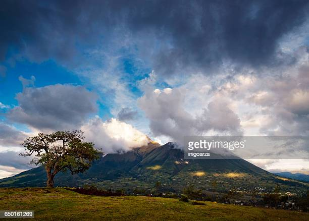'El Lechero' sacred tree and Imbabura volcano, Otavalo, Imbabura, Ecuador