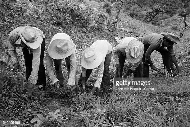 El Salvadoran refugees work in a field in La Virtud | Location La Virtud Honduras