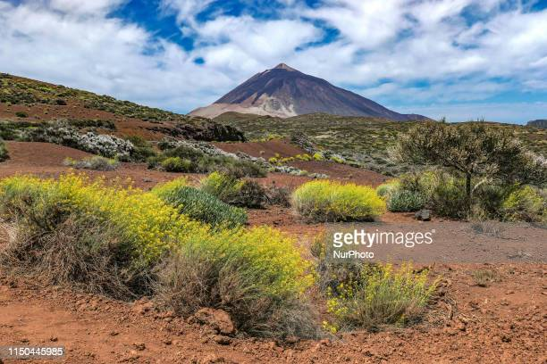 El Teide volcano mountain peak in Tenerife Canary islands of Spain with blue sky and clouds as seen from the northeast side of the island a protected...