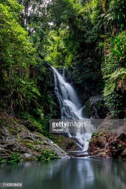 elabana falls - rainforest waterfall in lamington national park australia - gold coast queensland stock pictures, royalty-free photos & images