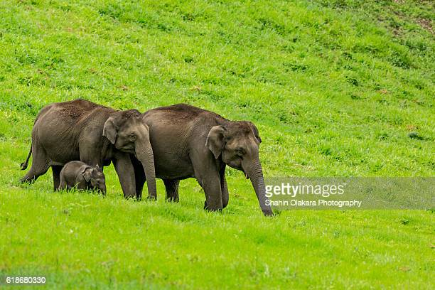 elaphant from kerala - kerala elephants stock pictures, royalty-free photos & images