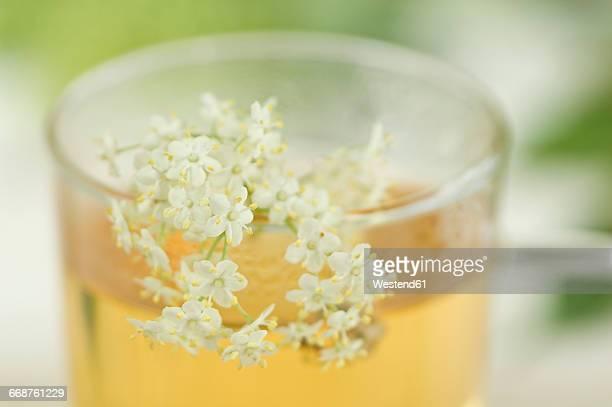 Elder flower tea, cup with elderflowers