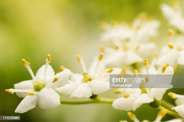 Ältere Blumen auf Green-Natur Makro