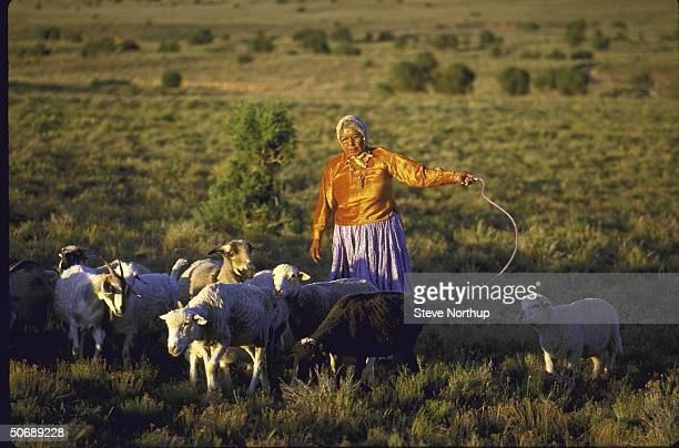Elder of Navajo tribe Roberta Blackgoat tending her herd on Navajo reservation threatened by land dispute with neighboring tribe