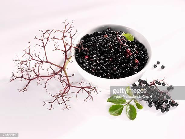 Elderberries stripped off their stalks
