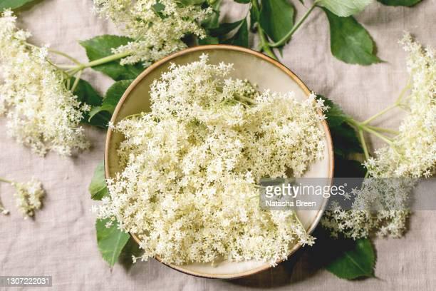 elderberry flowers and syrup - bloesem stockfoto's en -beelden