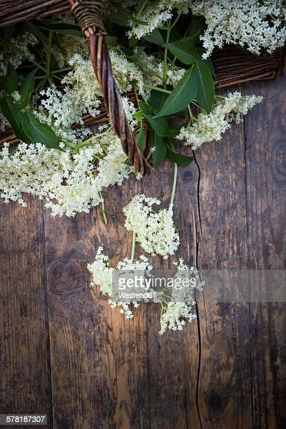 Elderflower on dark wood