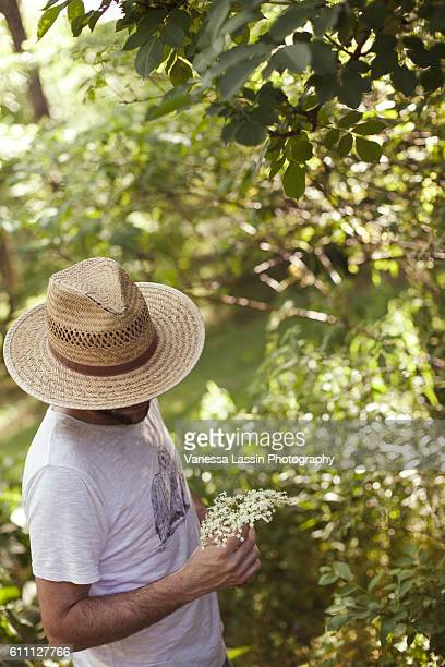 elderflower picking - vanessa lassin stock-fotos und bilder
