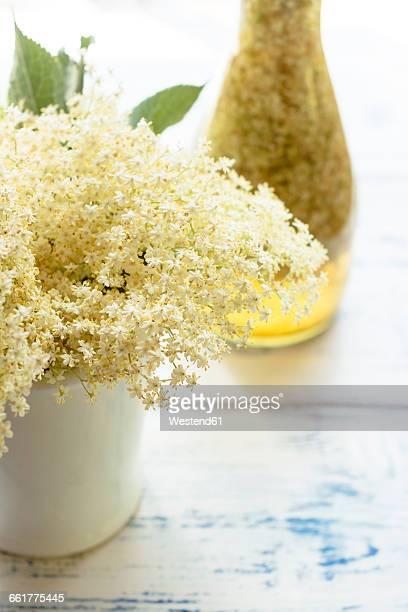Elderflower Tincture, fresh elder flowers, vodka and water