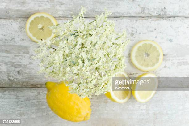 Elderflowers and whole and sliced lemon