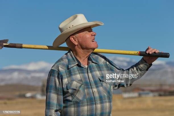 elderly cattle rancher - female animal stock pictures, royalty-free photos & images