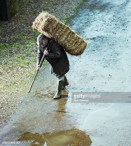 Elderly farmer carrying straw bale, Northampton, England