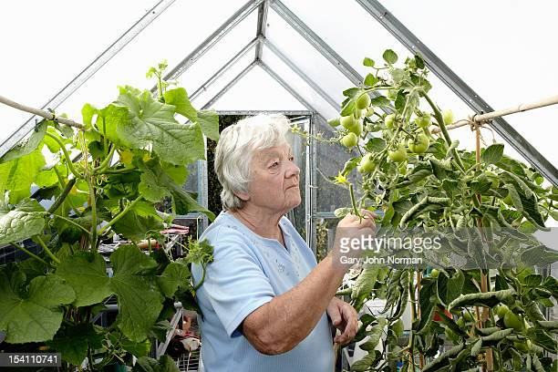 elderly lady in greenhouse - norman elder stock photos and pictures
