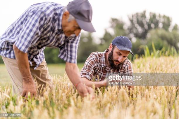 elderly man and young farmer in the field - agronomist stock pictures, royalty-free photos & images