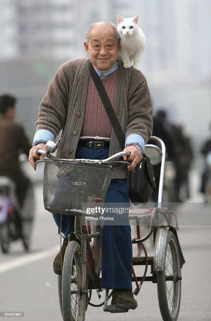 Elderly Man Carrying Cat Rides Tricycle At A Street : Stock Photo