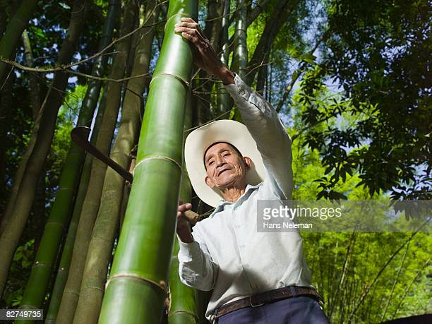 elderly man cutting down bamboo - las posas stock pictures, royalty-free photos & images