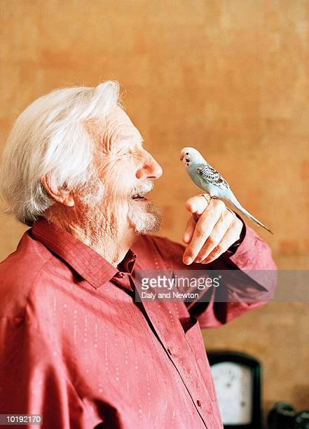Elderly man holding budgie, indoors, profile